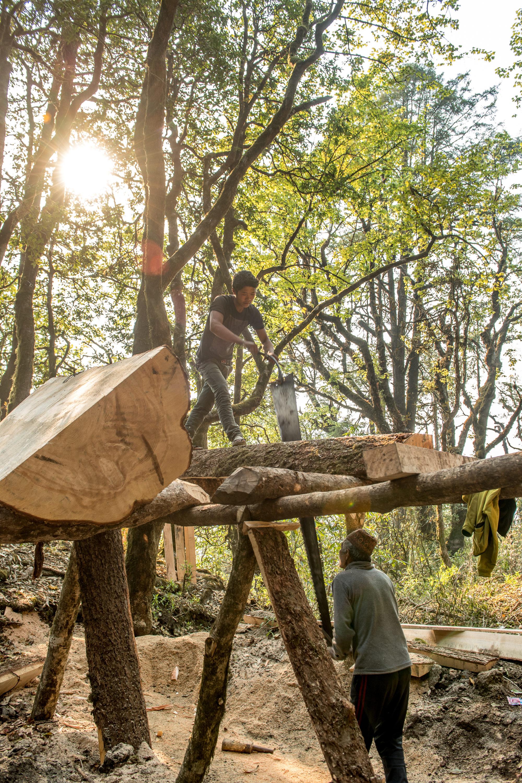 Padre e figlio che tagliano a mano un tronco di albero per for Tronco albero arredamento