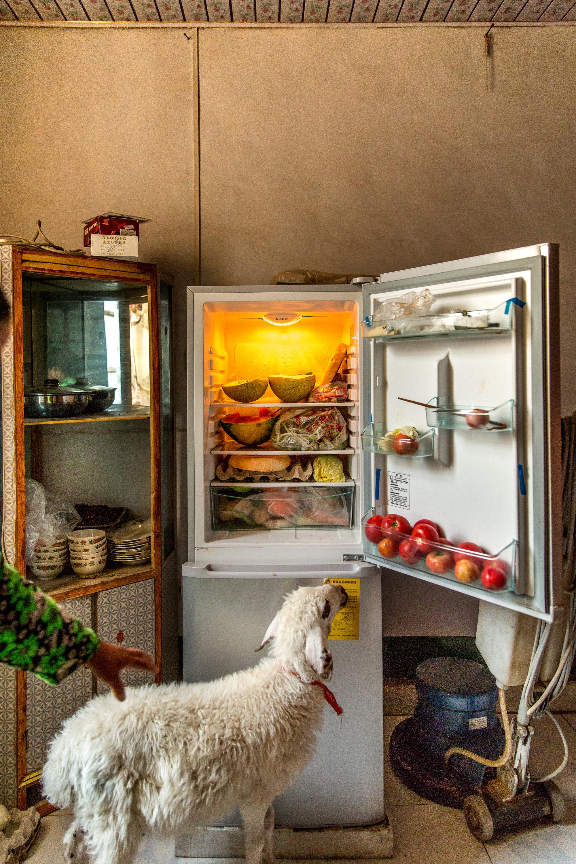 Foto Di Interno Di Una Casa Di Turpan Con Frigorifero E Pecora